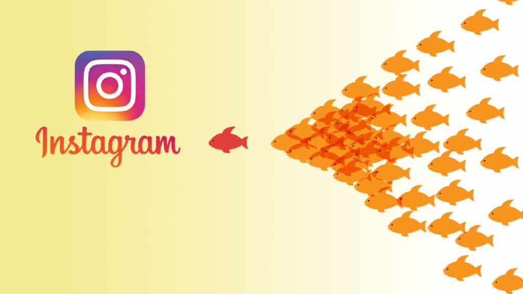 How to Gain 1000 Followers on Instagram